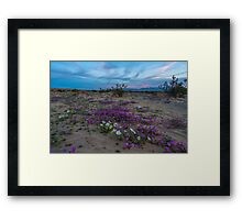 Sunset Colors and Spring Wildflowers in Anza Borego Framed Print