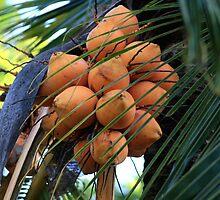 Fruitful by Nathan Senevirathne