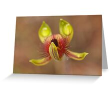 Caladenia discoidea – Dancing Spider Orchid (2) Greeting Card