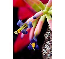 Bromeliad Photographic Print
