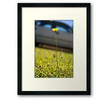 Sunshine in Suburbia Framed Print