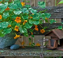 Nasturtiums In The Breeze by Sandra Foster