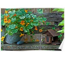 Nasturtiums In The Breeze Poster