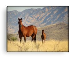 Mountain Mama  Canvas Print