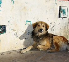 Dog in San Cristobal de las Casas by almulcahy