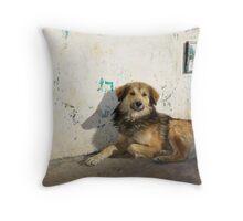 Dog in San Cristobal de las Casas Throw Pillow
