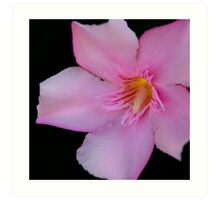 Pink Oleander Art Print