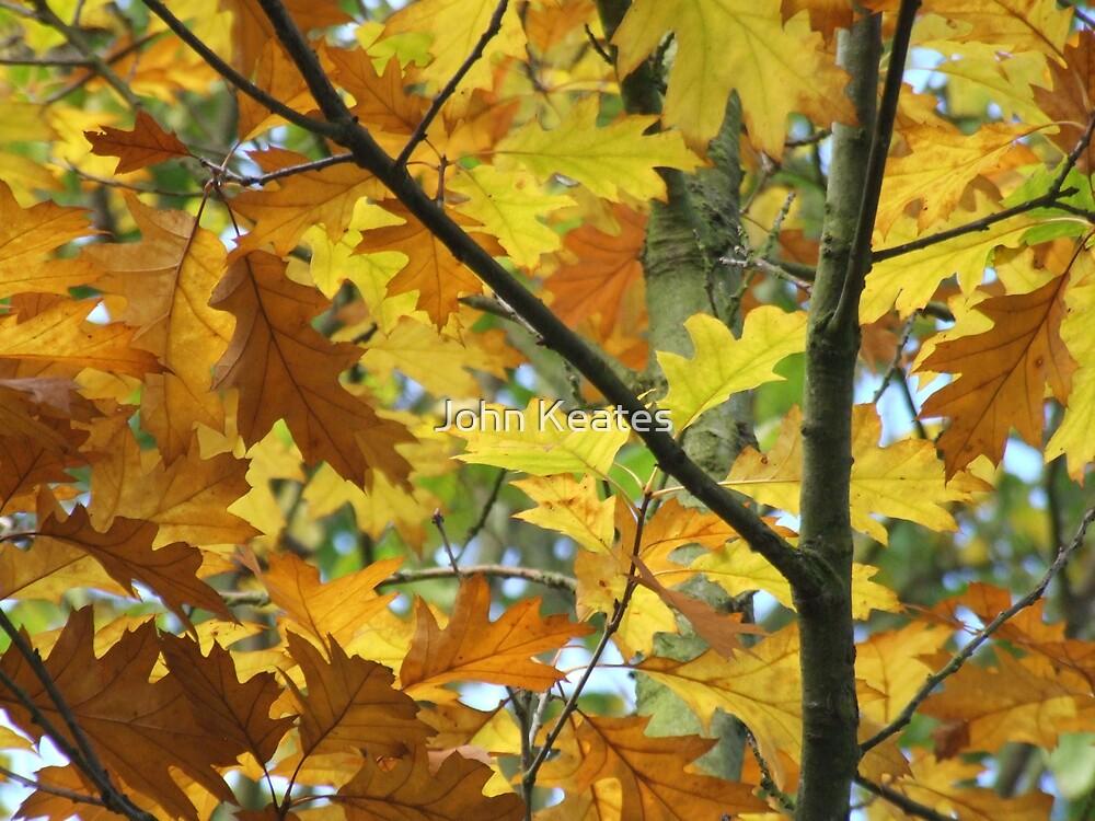 Autumn leaves by John Keates