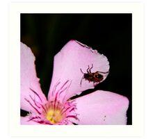 Milkweed Bug Art Print