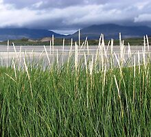 The Hills of Harris through the Long Grass by BlueMoonRose