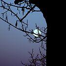 Moonbeams by Melissa  W