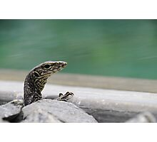 Baby Water Monitor Lizard Photographic Print