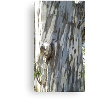 Gum tree 9: three trunks and a twisted knee. Canvas Print
