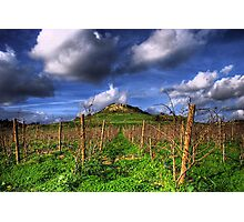 A Vineyard In Autumn  Photographic Print
