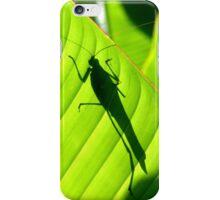 Katydid Silhouette iPhone Case/Skin