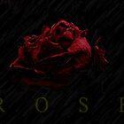 Rose by dotweb