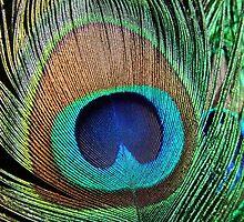 Eyes of a Feather by DARRIN ALDRIDGE