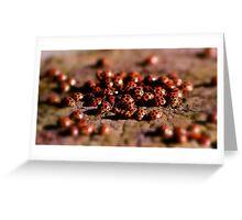 Ladybird Meeting place Greeting Card
