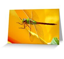 Majestic Green Darner Dragonfly Greeting Card