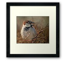 Sparrow At The Drive-Thru Framed Print