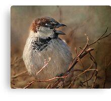 Sparrow At The Drive-Thru Canvas Print