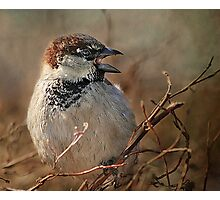 Sparrow At The Drive-Thru Photographic Print