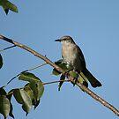 The Mockingbird by Virginia N. Fred