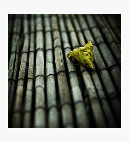 traces of autumn Photographic Print