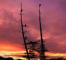 Eagles & The Sunrise by Gail Bridger
