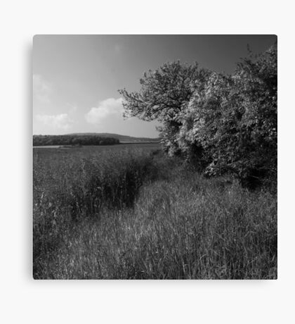 Northumberland Hedgerow Canvas Print