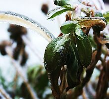 Ice Storm by JKopec