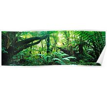 Cool Temperate Rainforest Poster