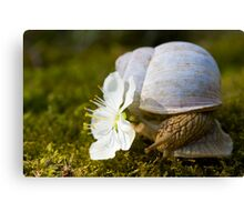 Living In The Shell Canvas Print