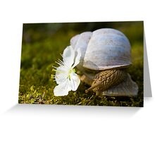 Living In The Shell Greeting Card