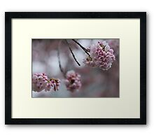 Faded Cherry Blossoms Framed Print