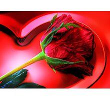 Valentine's Day Rose Photographic Print