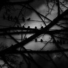 Bird Mystery by WaleskaL