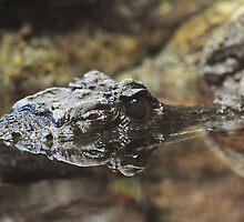 Dwarf Crocodile by Dennis Stewart