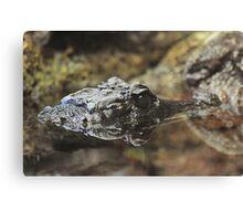 Dwarf Crocodile Canvas Print