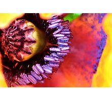 Poppy puzzle Photographic Print