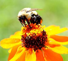 Bee on a Flower by bloomingvine