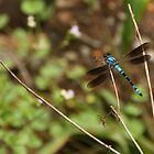 Blue Dragonfly by Nickie