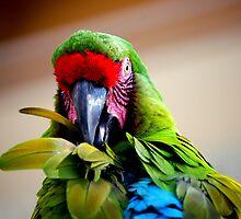 Had my feathers ruffled today.... by LjMaxx