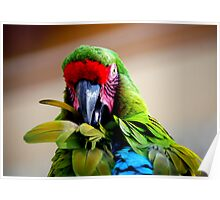 Had my feathers ruffled today.... Poster