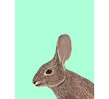 Roger - Bunny, Rabbit, Pet, Cute, Easter, Pet Rabbit, Pet Friendly, Bunny Cell Phone Case Photographic Print