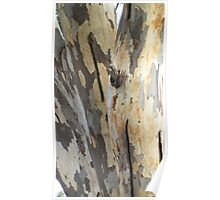 Gum tree bark 7 Poster