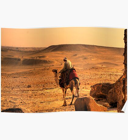 egyptian camel Poster