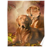 Cha Cha - The Chocolate Lab Poster