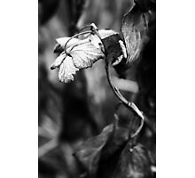 Dry plant Photographic Print