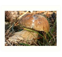 mushrooms (Boletus edulis) Art Print